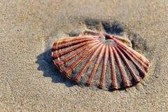 Concha de peregrino Shell ~ Lyme Regis imágenes de archivo libres de regalías