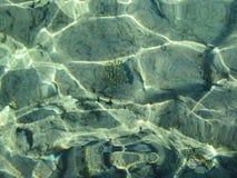 Concha de peregrino y arrecifes de coral en la parte inferior del Mar Rojo Fotografía subacuática fotos de archivo libres de regalías