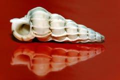 Concha do mar  Imagem de Stock