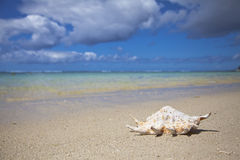 Concha do mar Foto de Stock Royalty Free
