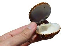 A concha do mar bivalve dos moluscos guardada abriu na mão esquerda do homem adulto, fundo visível, branco interior fotos de stock royalty free