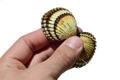 A concha do mar bivalve dos moluscos realizou na mão esquerda do homem adulto como os olhos e o nariz, fundo branco imagem de stock