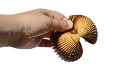 A concha do mar bivalve dos moluscos realizou na mão esquerda do homem adulto, fundo branco fotos de stock royalty free