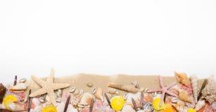 Concha do mar da estrela do mar da areia de Clouseup no fundo branco fotos de stock royalty free