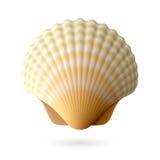 Concha do mar da vieira Imagens de Stock Royalty Free