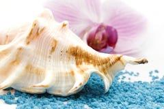 Concha do mar de Brown imagens de stock