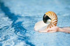 Concha do mar do nautilus nas mãos da criança com o backgro de cristal da água azul Fotos de Stock Royalty Free