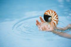 Concha do mar do nautilus nas mãos da criança com o backgro de cristal da água azul Imagens de Stock Royalty Free