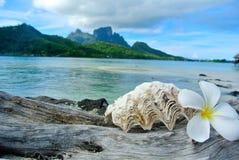 Concha do mar e flor na madeira lançada à costa Bora Bora imagens de stock royalty free