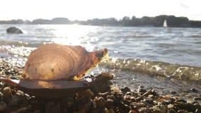 Concha do mar e rio atrás foto de stock