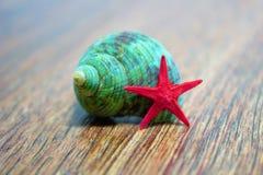 Concha do mar e uma estrela vermelha Fotos de Stock Royalty Free