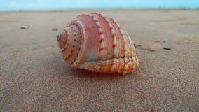 Concha do mar em uma praia - opinião do close-up fotos de stock royalty free