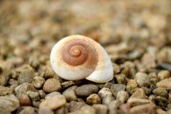 Concha do mar em uma praia rochoso Imagem de Stock