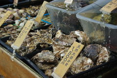 Concha do mar japonesa fresca Fotografia de Stock