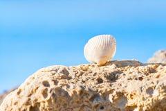 Concha do mar do lamarcki de Cerastoderma em uma pedra contra claro - céu claro azul imagens de stock