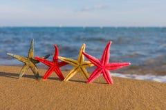 Concha do mar na praia Imagens de Stock Royalty Free