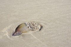 Concha do mar na praia Imagem de Stock Royalty Free