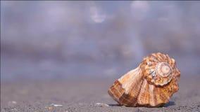 Concha do mar na praia vídeos de arquivo