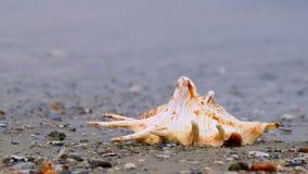 Concha do mar na praia filme