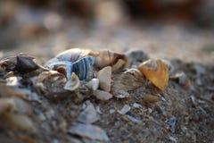 Concha do mar na praia arenosa do Mar Negro de Ucrânia do sul Imagens de Stock Royalty Free