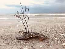 Concha do mar na praia do oceano Imagens de Stock