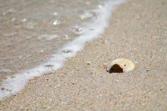 Concha do mar no litoral fotografia de stock royalty free