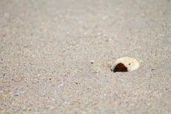 Concha do mar no litoral imagens de stock