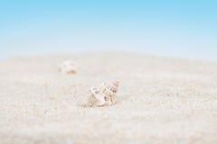 Concha do mar pura no Sandy Beach Imagem de Stock
