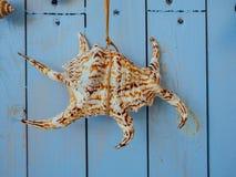 Concha do mar que pendura na corda, denominação do vintage Foto de Stock