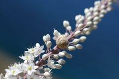 Concha en la flor Imagen de archivo