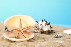 Concha marina Fotografía de archivo libre de regalías
