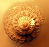 Concha marina fotos de archivo