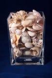 Concha marina aislada en el fondo azul Fotografía de archivo libre de regalías