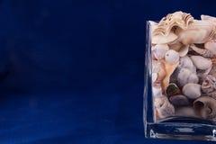 Concha marina aislada en el fondo azul Foto de archivo