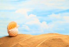 Concha marina amarilla estacional, blanca del verano en la playa arenosa con el fondo del cielo azul y el espacio coloridos solea imagenes de archivo