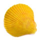 Concha marina bivalva aislada en el fondo blanco imagen de archivo