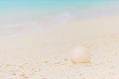Concha marina blanca en la arena en la playa fotografía de archivo libre de regalías