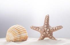Concha marina blanca y una estrella de mar en la arena blanca Primer Espacio de la copia del concepto Fotografía de archivo libre de regalías