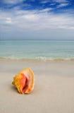 Concha marina Cuba Fotografía de archivo libre de regalías