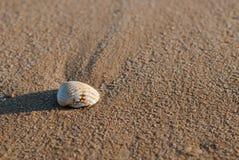 Concha marina de Algarve Foto de archivo libre de regalías