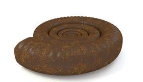 Concha marina de la amonita aislada Fotografía de archivo libre de regalías