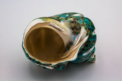 Concha marina de la turquesa Fotografía de archivo