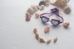 Concha marina del verano Fotos de archivo