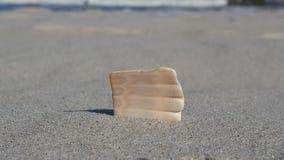 Concha marina en la arena Imágenes de archivo libres de regalías