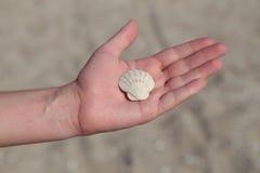 Concha marina en la mano masculina Imagen de archivo