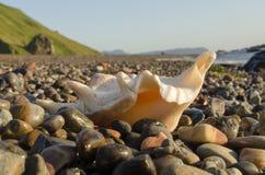 Concha marina en la orilla Imagenes de archivo