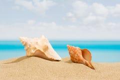 Concha marina en la playa Imagen de archivo libre de regalías