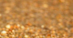 Concha marina en la playa almacen de metraje de vídeo