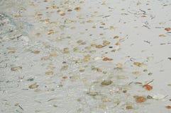 Concha marina en la playa Foto de archivo