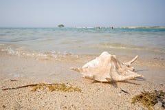 Concha marina en la playa Fotos de archivo libres de regalías